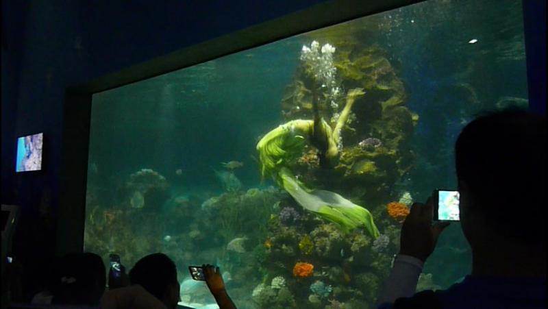 Шоу русалок в океанариуме