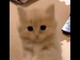 Котик просит сердечко 👆🏻❤️😇 #virusvideo