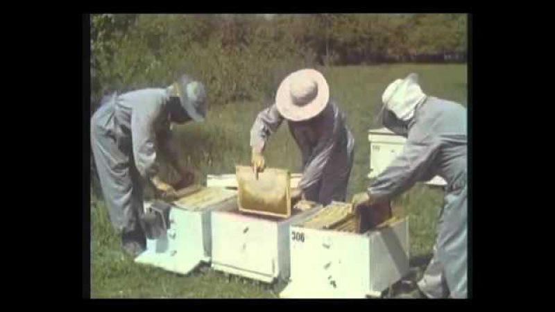 Промышленное пчеловодство в СССР