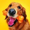 Без собак нельзя никак