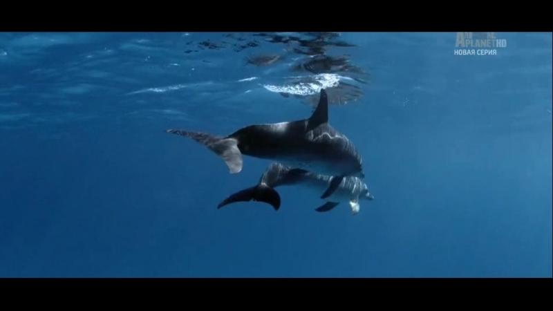 Ролик переделанный мною вырезал его из документального фильма голубые багамы автор Максим Коломацкий