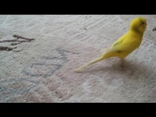 Реакция птицы на прощание с другом разобьет ваше сердце