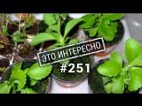 Это интересно: 10 Поразительных факта о растениях
