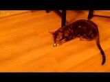 Листик с кошачьей мятой