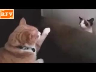 Самые смешные кошки #7 ∙ Приколы с животными 2015 ∙ Best Funny Cats Compilation · Part 7