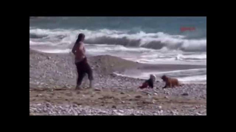 Как собака спасла ребенка на море, Dog saved the child Köpek Bebeğin Hayatını Kurtardı