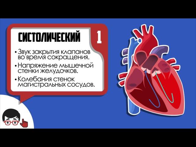 Аускультация сердца основные тоны