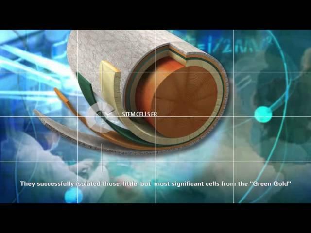 Косметика на основе фито стволовых клеток женьшеня и тисса (Winalite)