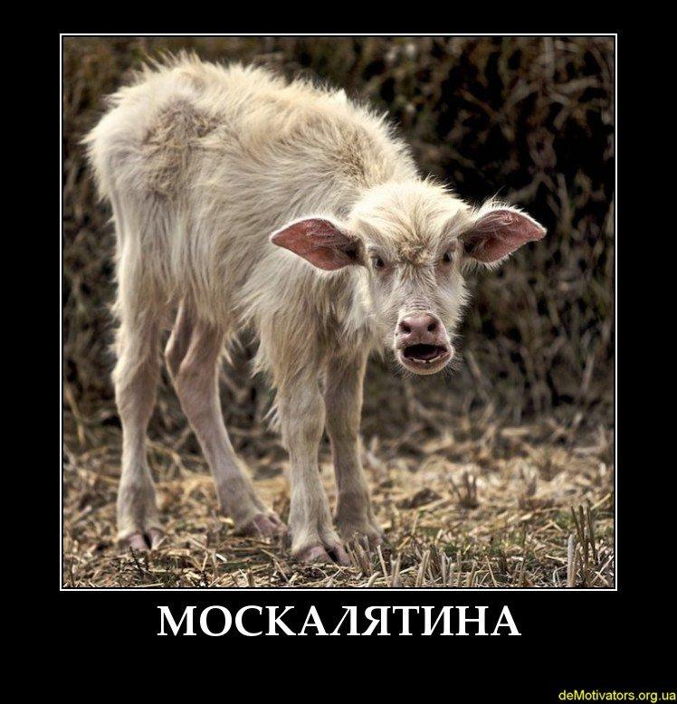 Неизвестные разгромили автомобиль журналистки Светланы Крюковой - Цензор.НЕТ 5206