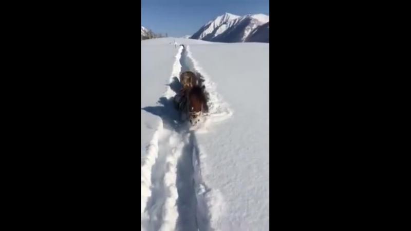 Алтайдағы қыс