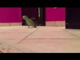 Зловещий+смех+попугая