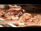 Человек в поисках еды, 1 сезон, 7 эп. Лучшее барбекю Атланты