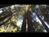 Принц леса fanfic trailer ~KaiLu~