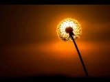 Melodic Techno - Summer Sun Set
