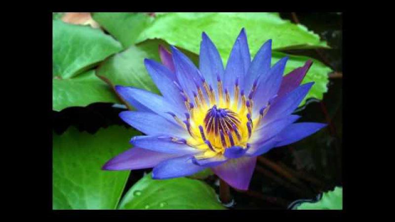 Imee Ooi - The Divine Mantra of Bodhisattva Avalokitesvara (Sanskrit)