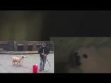 Пес и коза в одной группе