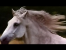 Белый Конь. Александр Малинин.