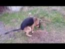 Собачка Какает