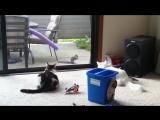 Эти странные коты