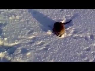 Петрович поймал странную рыбу