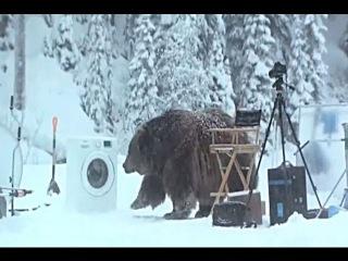 Медведь напал на съемочную группу!!! Жесть!!!!