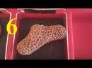 La Scienza di Giacomo - Collezione di fossili Geoworld 6 Sesto fascicolo - Il Corallo coloniale