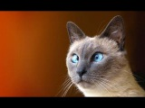 Funny Cat & Cute Kittens Fail Videos The Best Funny Kitty Cat Video № 18 | Morsomme Katter № 18
