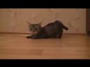 смешные видео про котов))) ржачные котэ