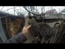 Дружимся с котейкой
