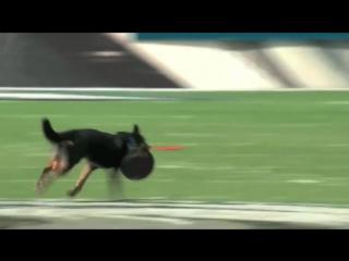 Самые умные собаки на планете!!!