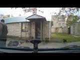 Бешеные собаки, сбили с ног - YouTube