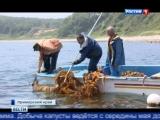 Добыча морской капусты в Приморском Крае
