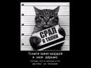 Смешное видео с котом  Кот повторяет за собаками