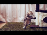 Funny Cat & Cute Kittens Fail Videos   The Best Funny Kitty Cat Video № 19 |  Morsomme Katter № 19