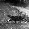 Бездомные кошки, которым ОЧЕНЬ НУЖНА ПОМОЩЬ!