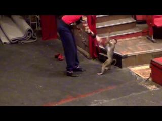 За кулисами цирка 2. Дрессировщики Большого Московского цирка, Цирка Никулина на Цветном бульваре в цирке на Фонтанке. ВИТА