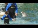 Правда о Плавании с Дельфинами