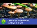 Хабургаев в натуре. Тайные связи 2015
