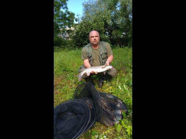Рыбалка на Реке Лещ и Усач Angeln am Fluss Brassen und Barbe