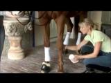 Защита ног спротивных лошадей. Бинтование.
