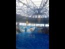 Выступление морского котика в дельфинарии в Сочи Парке!