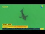 Акула откусила ногу молодому австралийцу