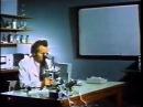 Кремний. Живое в неживом.Фильм СССР. Кремне-органические соединения.