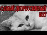 Самый депрессивный кот!