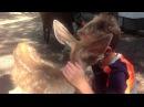 Friendly Orphaned Baby Deer