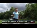 Florida Woman Jumps In Pond, Rescues Dog From Gator's Jaws