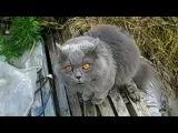 Кот говорит гад!
