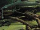 Смотрим рыбок. Аквариум. Гуляем в зоопарке. Харьковский зоопарк.