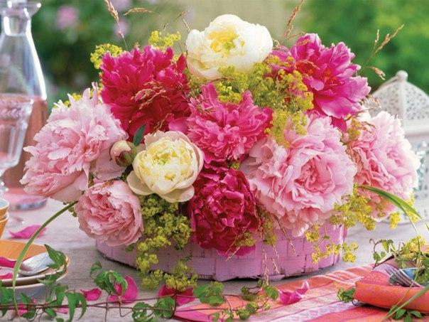 вид свежих цветов