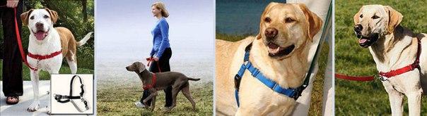 Обязательный минимум для содержания собаки (амуниция) O1tFMw3ToeU